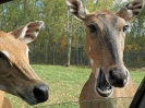 Parc Safari 2013