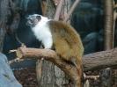 Zoo de Granby 2014